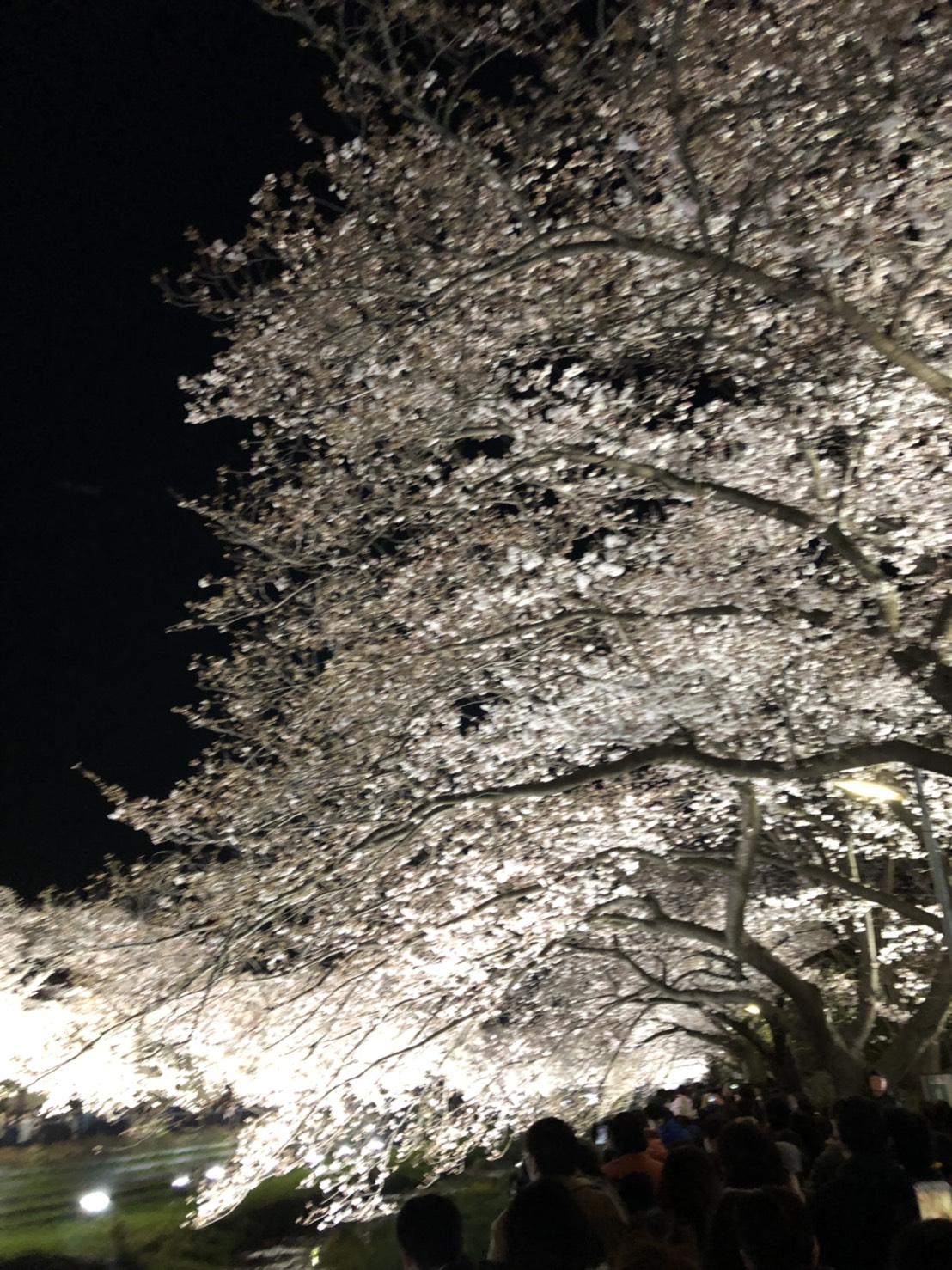 桜の次は桃だーよ!